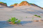 Vegetation on sand dunes on Prince Edward Island's north shore.