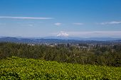View Of Mount Hood Oregon