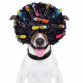 picture of long tongue  - dog with a crazy curly afro look wig and hair curlers - JPG