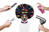 stock photo of scissors  - hairdresser scissors comb dog spray spa wellness - JPG