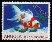 ANGOLA - CIRCA 2000: stamp printed by Angola shows Goldfish, circa 2000