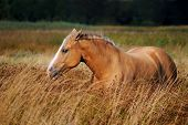 picture of horses eating  - Horse resting in the tall grass - JPG