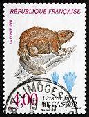 Postage Stamp France 1991 European Beaver, Animal