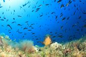 picture of grouper  - Grouper fish in Mediterranean Sea - JPG