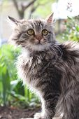 Cute fluffy kitten in the garden. Animal, mammal, domestic cat.