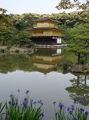 Golden Pavilion With Irises