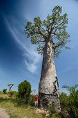 Tourist standing by baobab tree on an african lush meadow. Madagascar