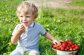 stock photo of strawberry blonde  - Happy little toddler boy on pick a berry organic strawberry farm