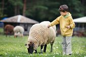 Cute little boy feeding a sheep