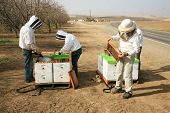 image of bee-hive  - Genuine Unidentifiable Bee Keepers inspect their Bee Hives and their Bees to make sure they are healthy and doing their job of pollinating plants and making honey - JPG
