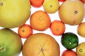 picture of clementine-orange  - Background of assorted citrus fruit on white including clementines nectariines tangerines lime orange and grapefruit in a close up overhead view showing the texture of the rind - JPG