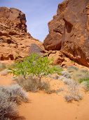 picture of valley fire  - Bright green tree in Valley of Fire Nevada - JPG