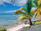 Tropical Beach In Dominican Republic. Caribbean Sea. Island Saona