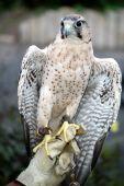 Talk to the Hawk