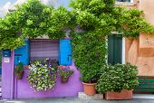 Color house with flowers on Burano island near Venice , Italy