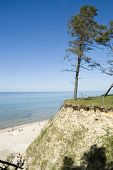Latvia. Beach And Pine On The Steep Coast Of  Baltic Sea