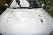 stock photo of poo  - A silver car very dirty from trees overhead dropping leaves sticks and bird droppings