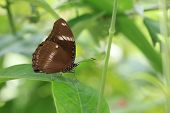 a beautiful brown butterfly