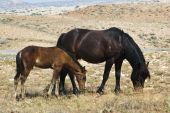 image of open grazing area  - free roaming mustangs in the Pryor Mountain wild horse range in Wyoming