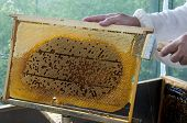 unsealing cells with honey