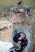 Infant Monkey Baby Sleeping