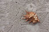 Sea Shell And Beach