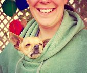 picture of chihuahua mix  - a chihuahua poking his head out of a person - JPG