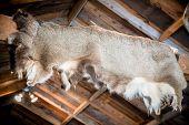 Deer Skin Hunting Cabin