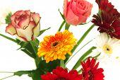 Gerberas And Roses, Flowers