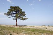 Sandy Beach With Pine Tree At Corsica