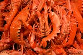 stock photo of crawfish  - Fresh orange crawfish still alive at the market - JPG