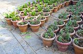 Flowerpots With Various Flowers Seedlings