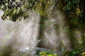 Backlit water spray from a waterfall in a forest