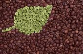 Green Leaf Made Of Coffee Beans