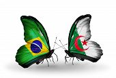 Two Butterflies With Flags On Wings As Symbol Of Relations Brazil And Algeria
