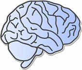 Brain Wallpaper Illustration