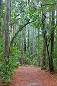 Forest Path With A Canopy Of Trees And Spanish Moss