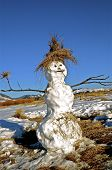 stock photo of marsh grass  - a three played snowman gives a jolly ambiance as a tuft of grass is used for a hat - JPG