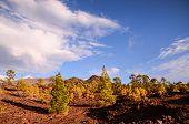 stock photo of canary  - Teide National Park in Tenerife at Canary Islands - JPG