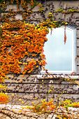 stock photo of climber plant  - Autumnal plant on a wall with window - JPG