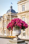stock photo of vase flowers  - Marble vase with flowers at the Luxembourg Garden - JPG