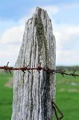 stock photo of lichenes  - weathered wooden fence post with lichen and rusty barbed wire on a field - JPG