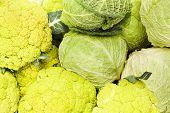 picture of cruciferous  - Organic Cauliflower and Cabbage Close up shot - JPG