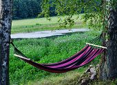 image of greenery  - Relaxing on hammock in garden isolated blooming - JPG