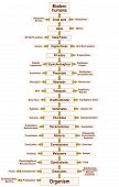 picture of organism  - Tree of life of the human evolution from ORGANISM to MODERN HUMANS - JPG