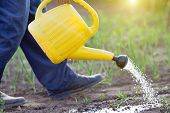 picture of spray can  - Close up of water can spraying sprouts in vegetable garden - JPG