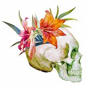 stock photo of sugar skulls  - Beautiful vector image with watercolor skull with flowers - JPG