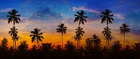 stock photo of southeast  - Coconut palms sharply silhouetted against the bold orange pink lavendar and blue colors of a tropical sunset in Thailand Southeast Asia - JPG