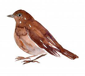 foto of nightingale  - watercolor drawing bird - JPG