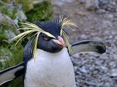 Penguin 003
